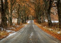 Old linden in rows (tods_photo) Tags: ifttt 500px trees leaves winter cold old road orange snow warm canon lines colours avenue linden gravel