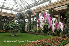 Longwood Orchid & Winter 2017 (201) (Framemaker 2014) Tags: longwood gardens kennett square pennsylvania chester county southeastern orchids winter united states america