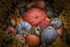Pumpkin Caboodle (zuni48) Tags: pumpkins gourds cucurbita autumn fall stilllife vignette hdr topazsoftware