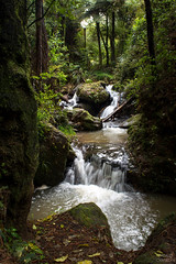 Forest Stream (Thibaud Chanfray) Tags: forest forêt stream ruisseau waterfall water cascade paysage landscape newzealand travel tree eau h2o ngc nature
