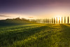 DSC00427_s (AndiP66) Tags: agriturismopoggiocovili poggio covili zypressen cypresses zypressenstrasse cypressstreet sonnenaufgang sunrise nebel dunst fog mist sonne sun morgen morning april spring frühling 2017 sony alpha sonyalpha sigma sigma24105mmf4dghsmart sigma24105mm 24105mm art amount andreaspeters 7markii 7ii 7m2 a7ii ilce7m2 laea3 siena pienza sanquiricodorcia valledorcia valle dorcia toscana tuscany italien italy