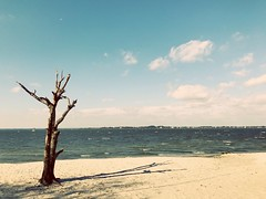 Assateague Island, VA (citron_smurf) Tags: beach assateague island virginia atlanticocean delmarva