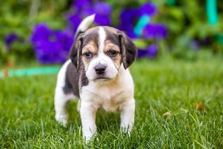Those Puppy Dog Eyes