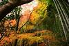 Kyoto's Autumn Colors (勇 YoungAdventure) Tags: japan japon nippon 日本 일본 kyoto 京都 교토 紅葉 autumn foliage flickrfriday chainedtothesky enchaînéauciel acorrentadoaocéu 链接到天空 andenhimmelangekettet encadenadoalcielo cc mt