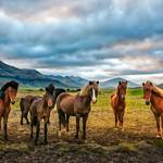 The Five Horsemen Of The Icelandopacalypse thumbnail