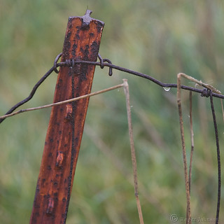 Another Rusty Fence Post