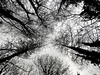 Nature in Silhouette (uk_dreamer) Tags: nature natur silhouette tree trees forest wood woodland black white bw blackandwhite monochrome noiretblanc contrast winter sky treeline abstract artistic leaves