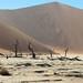 Deadvlie, Sossusvlei  and Big Daddy Sand Dune