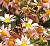 Butterfly Garden (caboose_rodeo) Tags: 1762 butterflies flowers flower plants plant flyinginsect fly nyackny forgreta rocklandcountyny autumn hudsonrivervalley