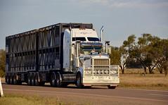 Kenworth (quarterdeck888) Tags: trucks transport semi class8 overtheroad lorry heavyhaulage cartage haulage bigrig jerilderietrucks jerilderietruckphotos nikon d7100 frosty flickr quarterdeck quarterdeckphotos roadtransport highwaytrucks australiantransport australiantrucks aussietrucks heavyvehicle express expressfreight logistics freightmanagement outbacktrucks truckies t909 kenworth stockcrate dunns cattle livestocktransport brokenriverhaulage