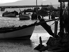 Fisherman. Kırdeniz - İzmir / Turkey.  P1070073sb (yalcin_savas) Tags: panasonic dmcfz20 blackandwhite monochrome fisherman rural kırdeniz izmir turkey