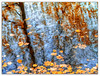 Drift... (Silke Klimesch) Tags: 7dwf fridaysflora autumn fall reflections trees distorted twisted lake water likeapainting abstract leaves fallen herbst spiegelungen wasser verzerrt wasseroberfläche laub blätter bäume abstrakt wieeingemälde automne feuillesmortes autunno réflexion outono rispecchiamento otoño reflejo reflexo toamnă berlin schlachtensee zehlendorf deutschland germany olympus omd em5 mzuikodigitaled60mm128macro microfourthirds nikcollection on1 sliderssunday hss postprocessedtothemax