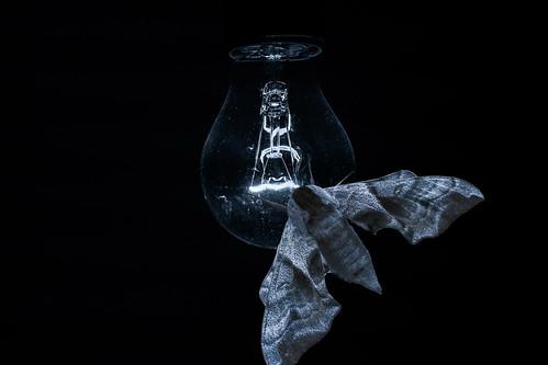 The moth on the light bulb