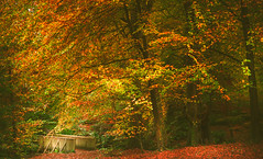 Autumn park (Dhina A) Tags: sony a7rii ilce7rm2 a7r2 autumn colors park crawfordsburncountrypark minolta af 50mm f28 macro minoltaaf50mmf28 7blades 1985 35mm primelens prime amount laea4