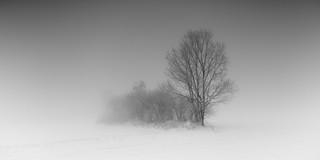 Treephony Iii