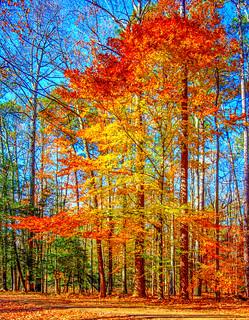 Waning Color Yorktown Nov 30 217