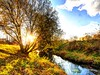 171113-0069-77 _Helle_FuNat_ (Pixel-Cat) Tags: hellersdorf berlin germany wuhletal wuhlerivervalley autumn herbst abend evening sunset sonnenuntergang landschaft landscape bach river wasser water baum tree wiese meadow olympus omd em5 mzuiko1250mm13563iiez