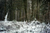 Winterland (Karsten Höhne) Tags: bäume eis felsen forst gipfel herbst hornbadmeinberg kälte lippe lippischevelmerstot naturschutzgebiet nebel regen schnee silberbachtal steine teuteburgerwald tour wald wanderweg winter