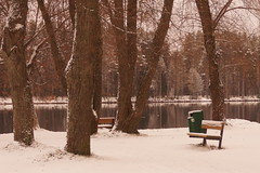 Old Willows (Sergei P. Zubkov) Tags: lake snow trees december