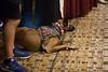 2017_NMSSS_BROOKE 50 (tapsadmin) Tags: brookephotography taps tragedyassistanceprogramsforsurvivors az phoenix nmsss nationals arizona nationalmilitarysuicideseminar 2017 fall military survivor indoor horizontal dog animal servicedog