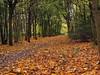 Autumn Path 077 (saxonfenken) Tags: 6854trees 6854 autumn fall leaves track path challengeyouwinner pregamewinner gamewinner