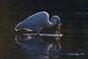 373.jpg (Kico Lopez) Tags: miño lugo spain galicia birds garcetagrande rio ardeaalba aves