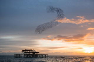Brighton's West Pier starling murmuration