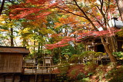 Temple in autumn (kat-taka) Tags: ã¬ãã temple autumn buddha red religion japan