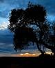 Big Country (Padmacara) Tags: australia outback g11 sunset tree sky cloud