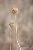 Off season shapes, Portugal (KronaPhoto) Tags: 2017 portugal natur nature blomst vissen old aged makro dof flowers blomster softtones simple minimalistic