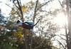 Land of bokeh (rootcrop54) Tags: needle felted needlefelting wool cat sculpture miniature superhero flying cape ooak neko macska kedi 猫 kočka kissa γάτα köttur kucing gatto 고양이 kaķis katė katt katze katzen kot кошка mačka gatos maček kitteh chat ネコ 9incheslong art