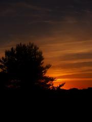 a tree (Darek Drapala) Tags: sun sky sunset silhouette skyskape trees tree nature night evening panasonic poland polska panasonicg5 baltic red lumix light