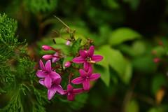 Flowers (superzookeeper) Tags: 5dmk4 5dmkiv hk hongkong canoneos5dmarkiv ef2470mmf28liiusm park eos digital kowloonpark tst tsimshatsui bokeh flower green