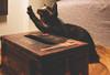 Stretching Cutely~😊♥️ 伸懶腰~~~ (Evo-PlayLoud) Tags: canonpowershotg1x canong1x g1x cat kitty canon lightfantasy 貓 伊伊 伸懶腰 stretching 玳瑁