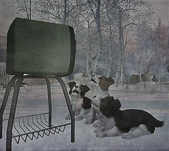 Only Good Doggies Are Allowed To Watch TV (ᗷOOᑎᕮ ᗷᒪᗩᑎᑕO) Tags: secondlife jian graceofhope puppies dogs snow ice trees television rabbit wildlife natural winter christmas 2017 dog laralayla