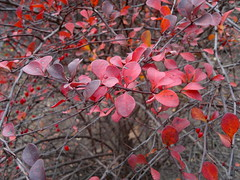 2017-11-09-11797 (vale 83) Tags: autumn nokia n8 friends autofocus coloursplosion colourartaward