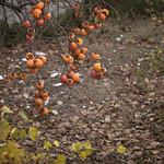 autunno thumbnail