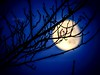 Branches d'arbres ! (Cedraw) Tags: branches arbres lune luna ciel cielbleu heurebleu nature paysage silhouette flou nette netteté lumière luminosité lumineux sombre couleurs coloré astrologie tamron70300 châlonsenchampagne champagneardennes marne grandest nordest nord est nikon nikond5300 tamron