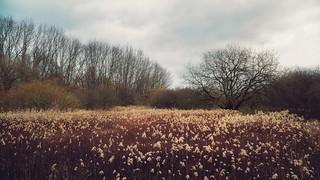 Naturschutzgebiet Hallerey