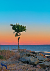 the lone tree with sunset colors in the sky (Singing With Light) Tags: 2017alpha6500 9th cairns milford mirrorless singingwithlight sonya6500 photography september singingwithlightphotography sony sunset walnutbeach