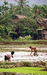 Tinh Ha Giang 008 (Phytophot) Tags: hanoi roadtrip china paddyfields village hills
