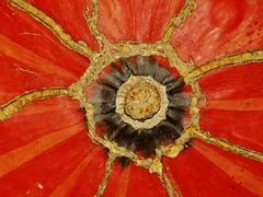sun-pumpkin - abóbora-sol (AnaValle) Tags: macro geométrico padrão laranja abóbora pumpkin raios vegetal