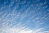 Cirrus CLouds (caribb) Tags: montreal montréal quebec québec canada 2017 day morning dawn clouds sky nuages atmosphere lookingup blueskyprettysky mothernature desnuages wolken nubes nuvole moln bulutlar skyscape سحاب 云 雲 बादल awanawan mraky σύννεφα nuvens 구름 ابر облака เมฆ đámmây skyer