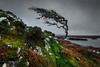The Lonely Tree - Connemara,Ireland (olinmariusz) Tags: pentax connemara pentaxk5iis sigma1020mm35ex irleland