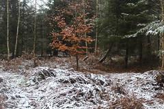 IMG_2033 (ihambi) Tags: hambi hambacherforst hambach hambacher kohleprotest earthfirst kohle occupation forestoccupation forest co2 coal climatechange climatecamp climate braunkohle breakfree solidarity