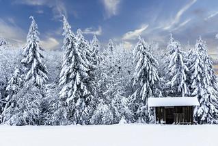 Winter Dolmar