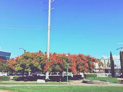 RG Shadows (jayplorin) Tags: trees road street san jose california blue sunny sky grass