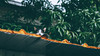 Where's the cat?|巷裡尋貓 (里卡豆) Tags: olympus penf 45mm f12 pro olympus45mmf12pro taiwan 台灣 chiayi 嘉義 cat 喵 貓 喵星人