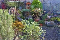 My Garden (brianarchie65) Tags: mygarden canoneos600d geotagged brianarchie65 flowers tubs blackbird