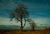 walkabout around Branky (TeDi62) Tags: branky valassko czech tree cluds autumn sky outdoor